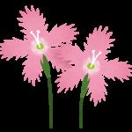 flower_nadeshiko
